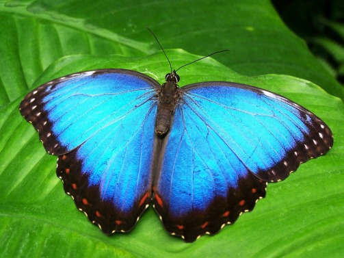 butterfly-142506_1280