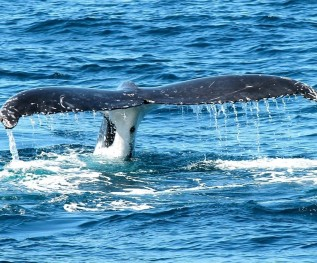 whale-367233_128021